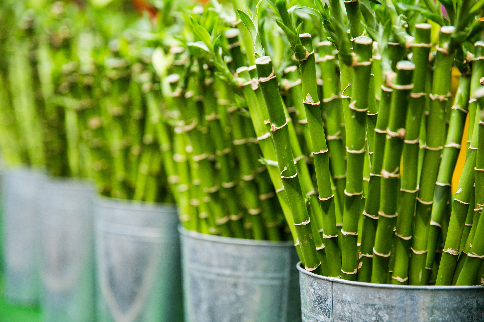 Buy bamboo Product