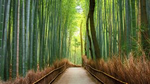 Why Choose Bamboo Products?