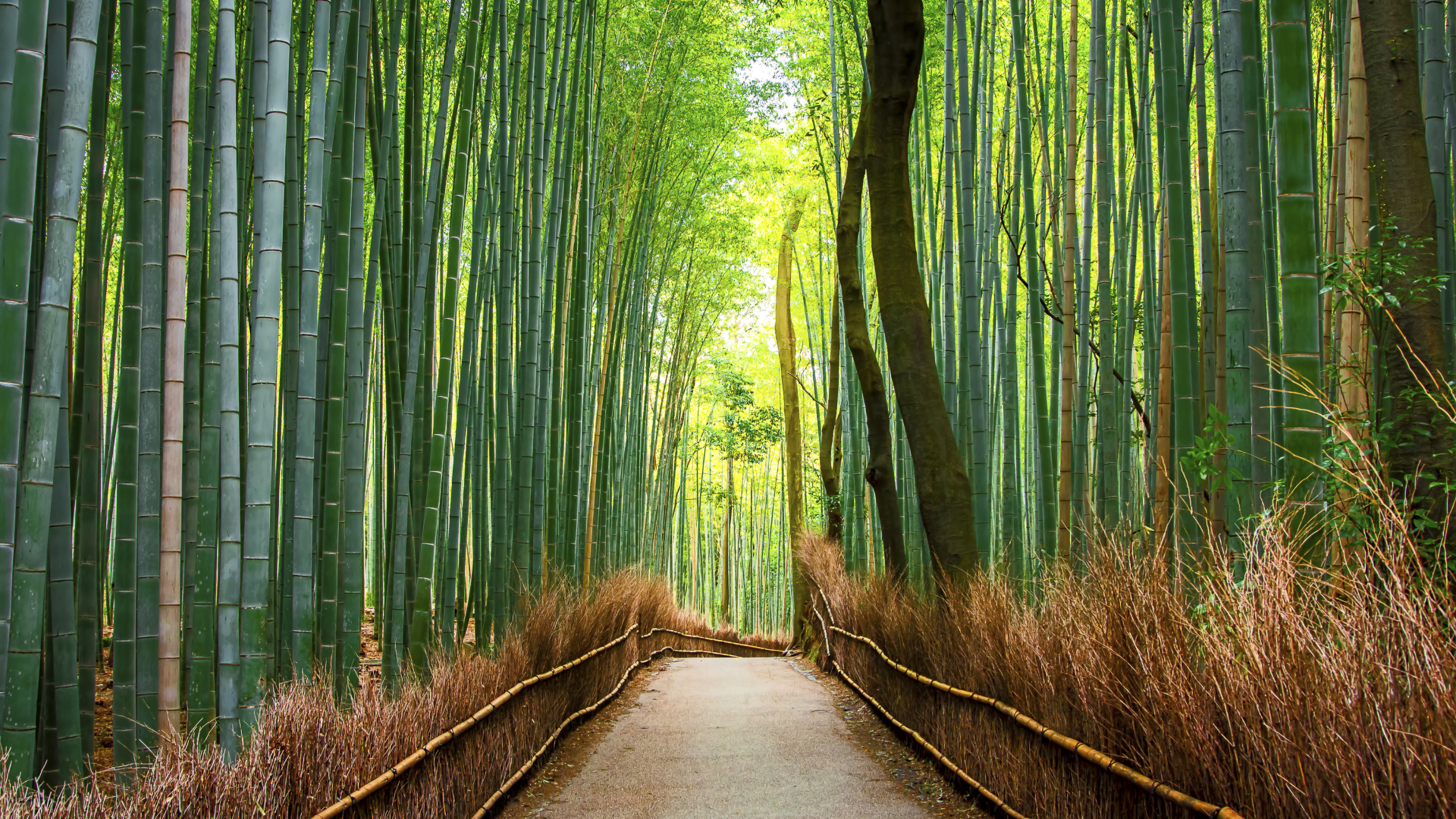 You are currently viewing Why Choose Bamboo Products?