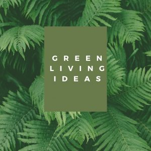 Read more about the article Simply Sustainable Living Ideas