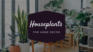 Which Houseplants Should Buy for the Decoration of Your Home