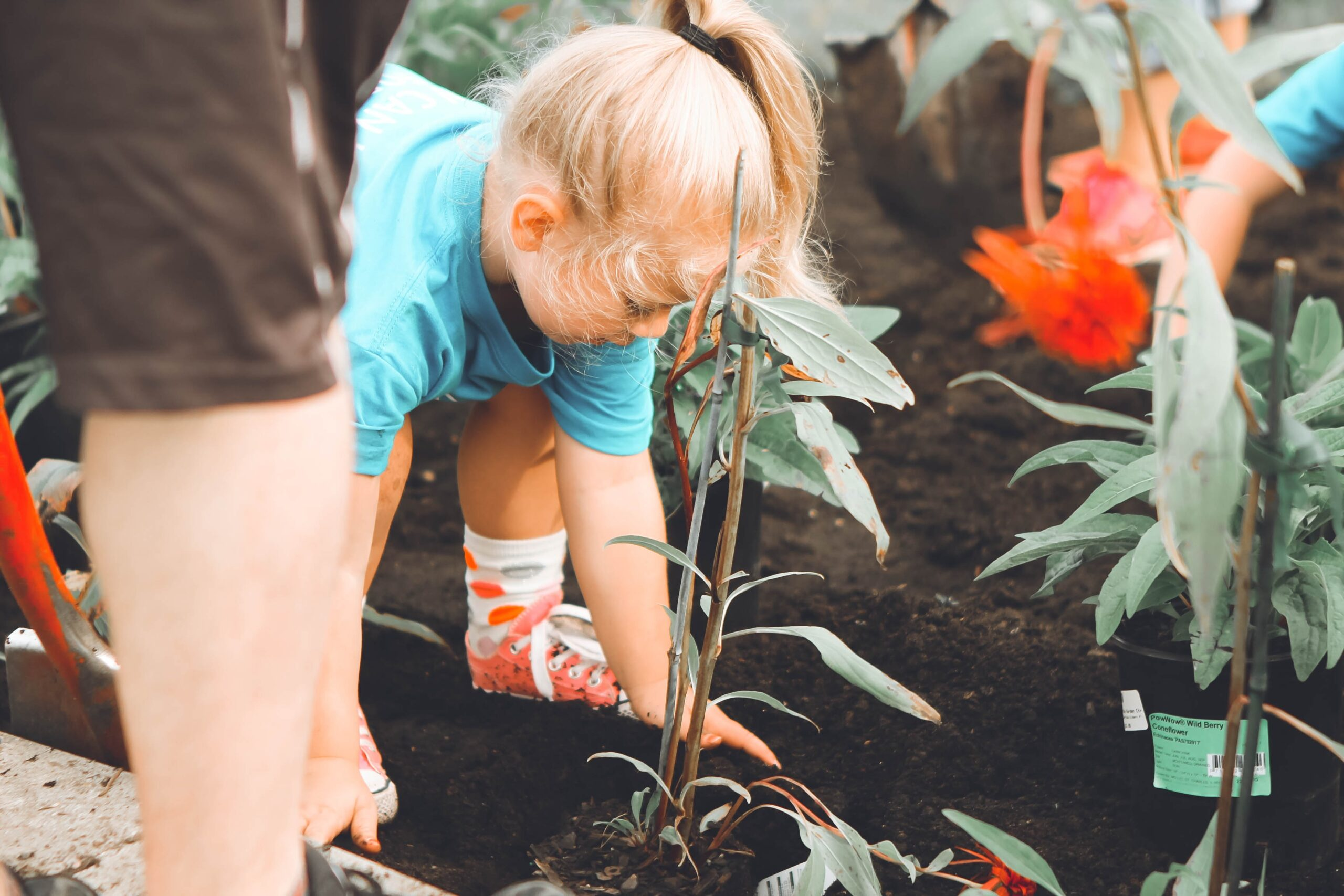 Read more about the article 7 Essential Gardening Tips