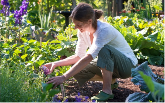 Some Great Health Benefits of Home Gardening