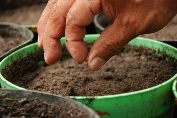 How to Sow Seeds in a Pot & Garden