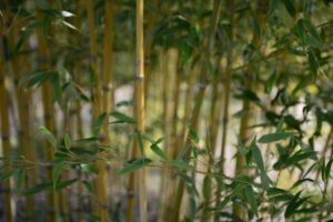 Read more about the article Why Choose Bamboo for a Sustainable Lifestyle?