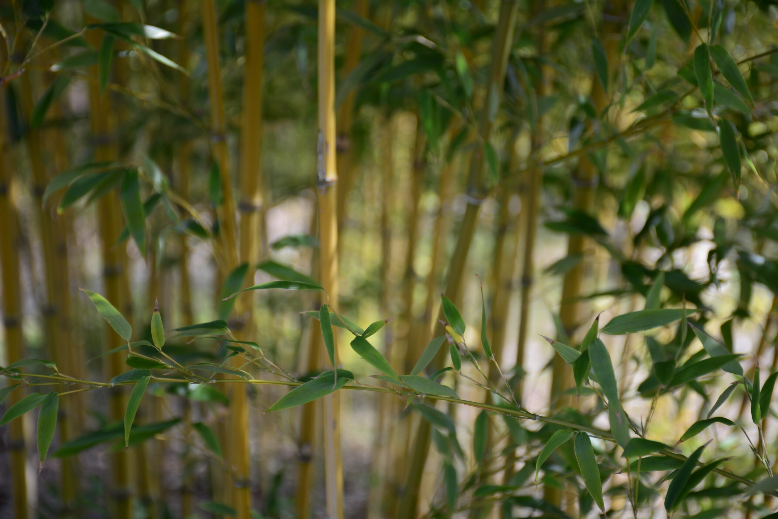 Why Choose Bamboo for a Sustainable Lifestyle?