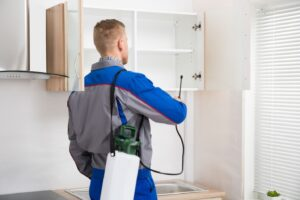 Signs of Pests in Your Home