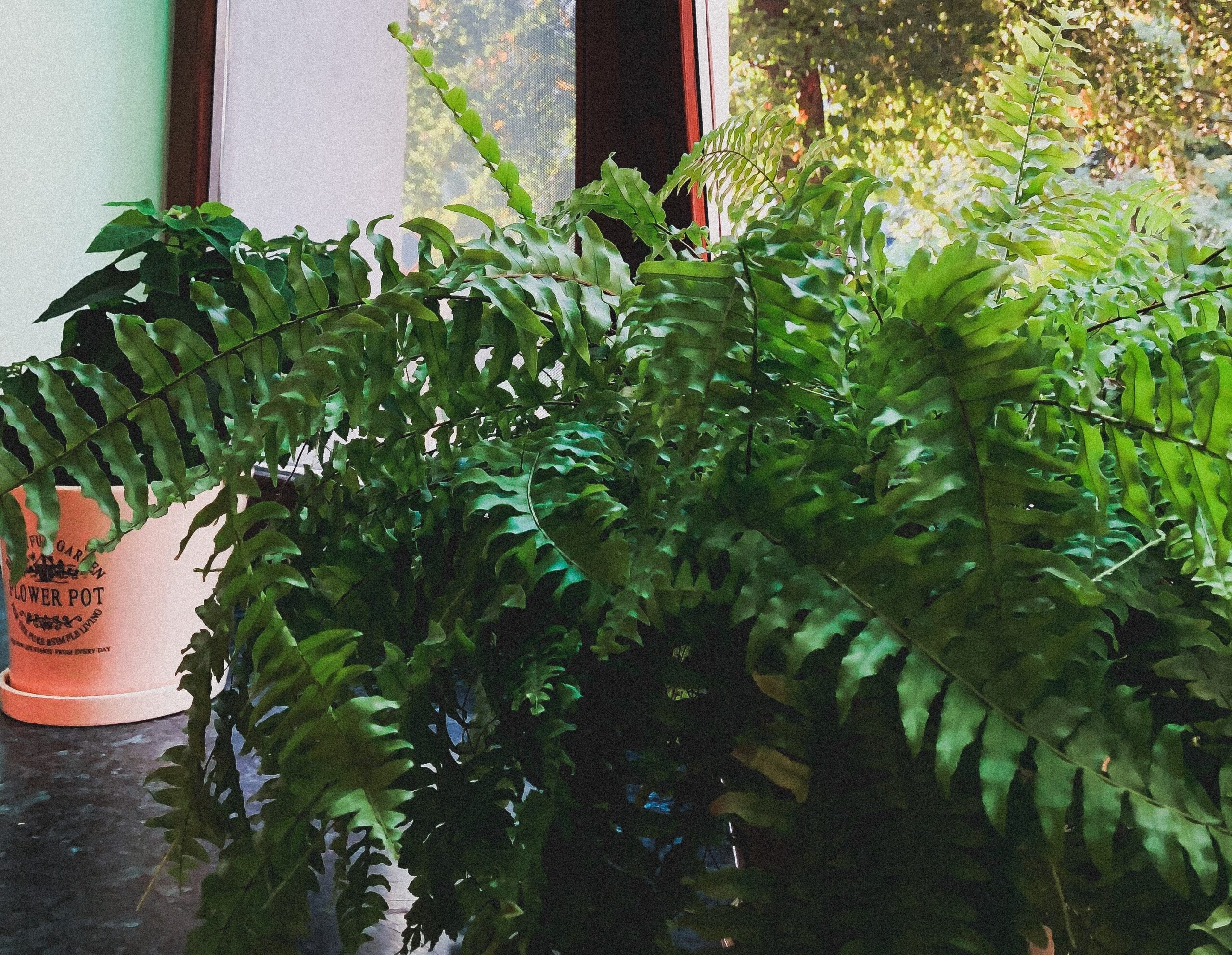 Tips to Naturally Improve Air Quality In Your Home