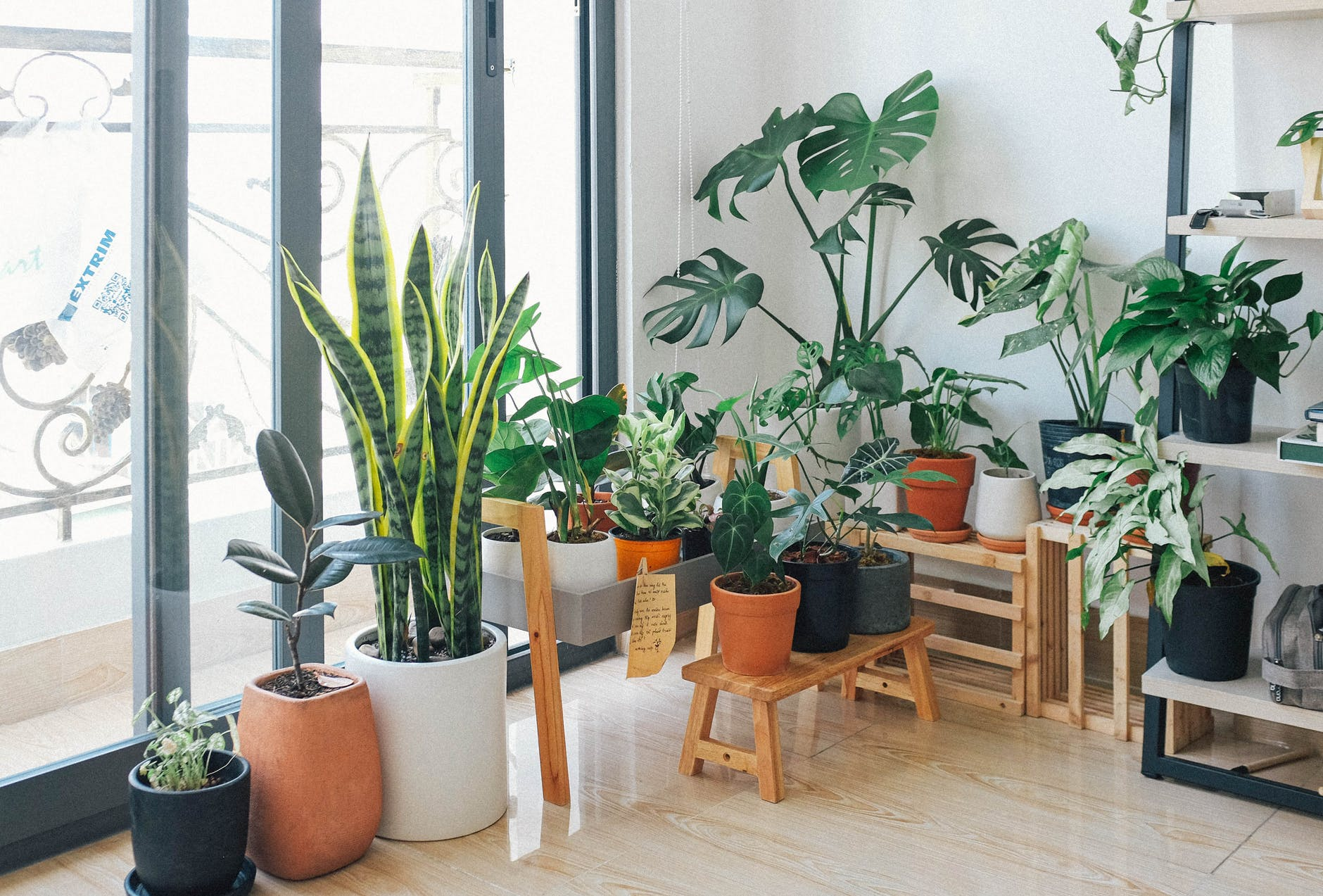 Read more about the article Indoor Inspo: 7 Tips for a Plant-Friendly Home