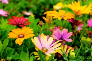 Read more about the article Getting Your Back Garden Ready For Summer