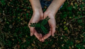 Read more about the article Salesforce Business Ideas For Eco-Minded Entrepreneurs